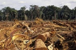 Deforestation and Guitars